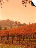 Silver Oak Cellars Winery and Vineyard  Alexander Valley  Mendocino County  California  USA