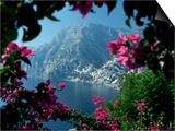 Positano and the Amalfi Coast through Bougainvilla Flowers  Italy