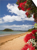 Pohutukawa Tree and Beach  Paihia  Bay of Islands  Northland  North Island  New Zealand