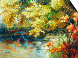 Creek and Fall Trees