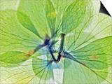 Fleur Serree III