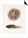Field Study Nest