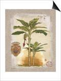 Linen Bannana Palm Tree