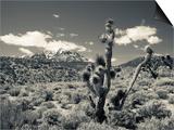 USA  Nevada  Las Vegas Area  Mt Charleston  Mountain Landscape