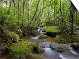 Rainforest and Waterfall in Biopark Near Entrance to Mount Kinabalu National Park  Sabah  Borneo