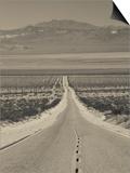 California  Mojave Desert  Amboy Road  USA