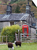 Herdwick Sheep and Cottage  Borrowdale  Lake District  Cumbria  England