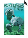 Manatees - Fort Myers  Florida