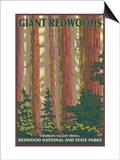 Giant Redwoods  Redwood National Park  California