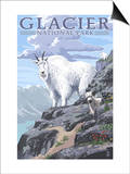 Mountain Goat and Kid - Glacier National Park  Montana