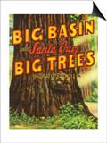 Santa Cruz  California - Big Trees Park  Big Basin Letters
