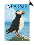 Maine - Puffin on Rock Scene