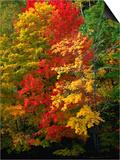 Autumn Colours in Marquette County  USA