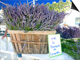 Lavender for Sale at 1 Euro a Bunch  at the Twice Weekly Famrer's Market in Coustellet