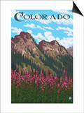Fireweed and Mountains - Colorado