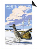 White Sands National Monument  New Mexico - Roadrunner