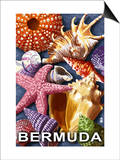 Bermuda - Shells