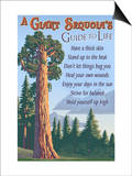 A Giant Sequoia's Guide to Life