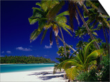 Beach with Palm Trees on Island in Aitutaki Lagoon Aitutaki Southern Group  Cook Islands