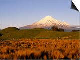 Snow-Capped Mt Taranaki from Across Plain  Taranaki  North Island  New Zealand