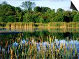 Man Fishing at Joe's Pond