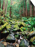 Rainforest in Sol Duc Rain Forest  Olympic National Park  Washington