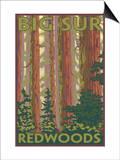Big Sur  California - Redwoods