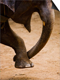 Elephant Forming Heart with His Trunk and Leg at Maesa Elephant Camp