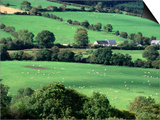 The Fields and Farmhouses of County Cork  Ireland