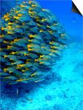 School of Colourful Fish in Blue Waters Off Isla De Cano