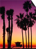 Palm Trees at Sunset  Venice Beach  Los Angeles  Los Angeles  California  USA