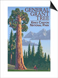 General Grant Tree - Kings Canyon National Park  California