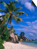 Palm Tree on Beach  Anse Source D'Argent  Seychelles