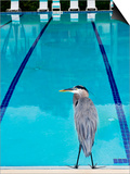 Heron at Pool