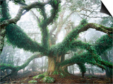 Largest known Myrtle Tree in the World