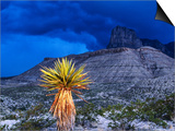 Yucca with Thunderstorm in Background  Guadalupe Mountains National Park  Texas