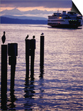 Wa State Ferry Coming in to Dock  Seattle  Washington  USA