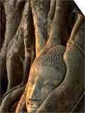 Buddha Head Inbedded in Roots at Wat Phra Mahathat  Ayuthaya  Thailand