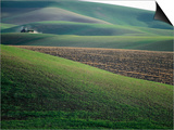 Rolling Hills and Ploughed Field in Spring  Palouse  USA