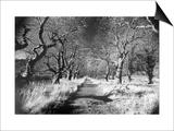 Woods at Loch Fynne  Argyllshire  Scotland