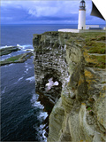 Lighthouse and Cliffs at Noup Head Rspb Reserve  Westray  Orkney Islands  Scotland