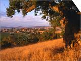 Firestone Vineyard in Background  Santa Ynez Valley  California