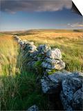 Dry Stone Wall and Moorland Grassland  Late Evening Light  Dartmoor Np  Devon  Uk September 2008