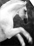 White Horse Prancing