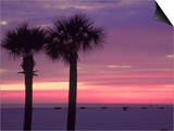Palm Trees at Dusk  St Petersburg Beach
