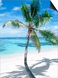 Beach with Coconut Palm (Cocos Nucifera) La Digue  Seychelles