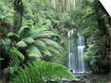 Triplet Falls  Victoria  Australia