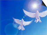 Two Doves Side by Side with Wings Outstretched in Flight with Brilliant Light And Blue Sky