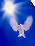 One Dove with Wings Outstretched Flying Towards Brilliant Light in Dark Blue Sky