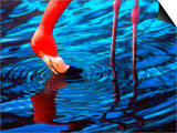 Flamingo  Florida